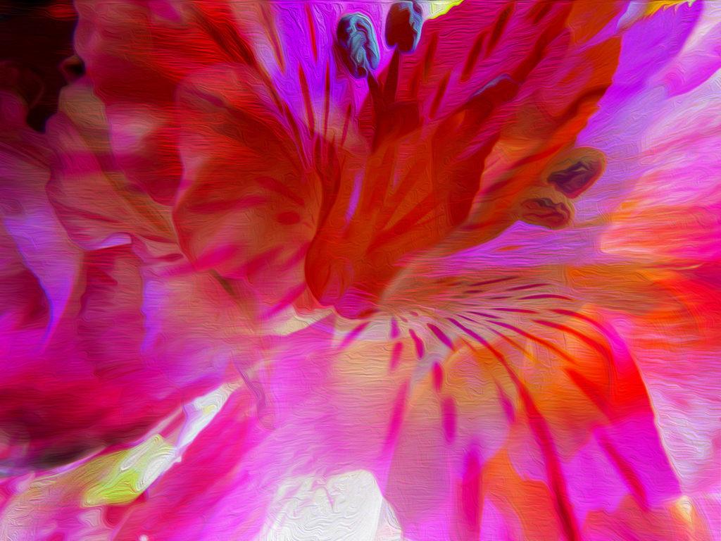 i am innocence discovery flower