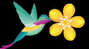 hummingbird kissing a yellow flower